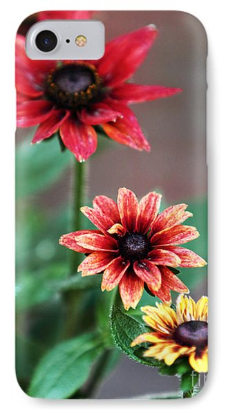 Three Flowers IPhone Case by John Rizzuto