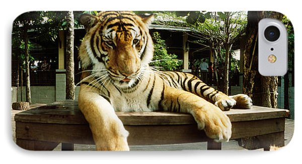 Tiger Panthera Tigris In A Tiger IPhone Case by Panoramic Images