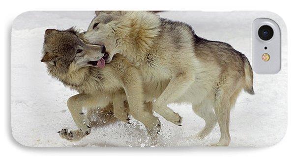 Timber Wolf  Pair Montana Phone Case by Matthias Breiter