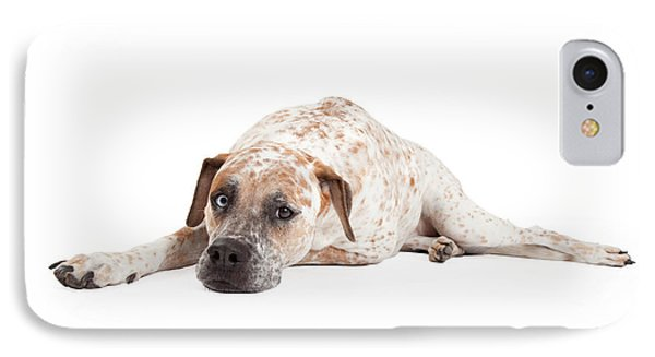 Tired Pointer Crossbreed Laying IPhone Case by Susan Schmitz