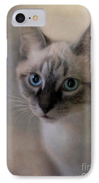 Tomcat IPhone Case by Priska Wettstein