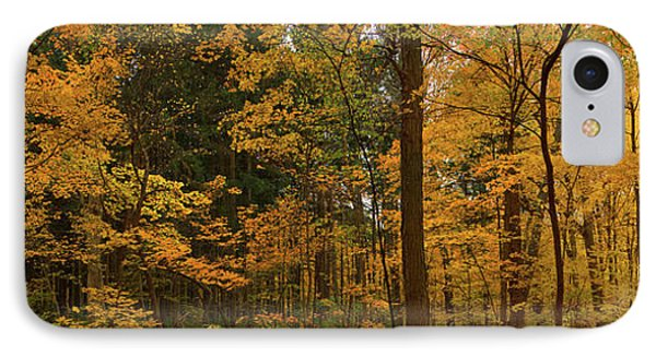 Trees In A Forest, Morton Arboretum IPhone Case by Panoramic Images