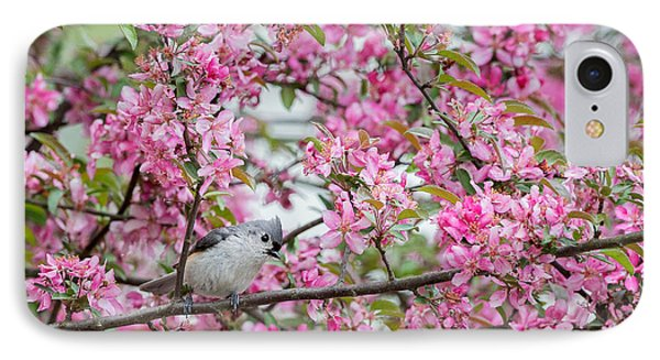 Tufted Titmouse In A Pear Tree IPhone Case by Bill Wakeley