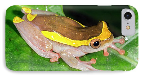 Upper Amazon Treefrog IPhone Case by Dr Morley Read