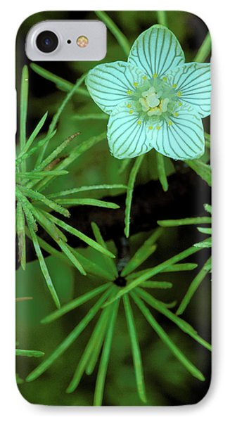 Usa, Michigan, Grass Of Parnassus IPhone Case by Jaynes Gallery
