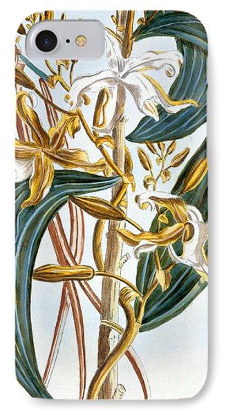 Vanilla Pods Phone Case by Pierre-Joseph Buchoz