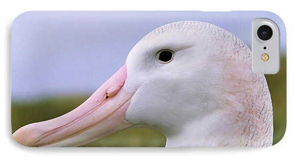 Wandering Albatross (diomendea Exulans IPhone Case by Martin Zwick