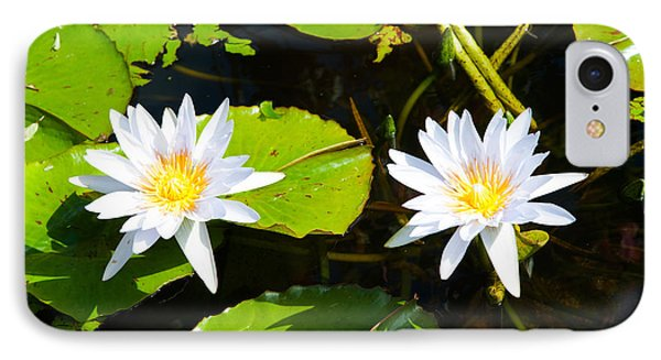 Water Lilies With Lily Pads In A Pond IPhone Case by Panoramic Images