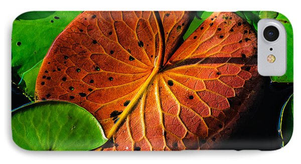 Water Lily Pad IPhone Case by Louis Dallara
