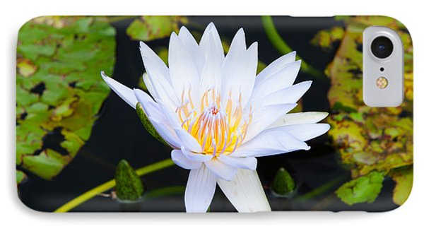 Water Lily With Lily Pads In A Pond IPhone Case by Panoramic Images