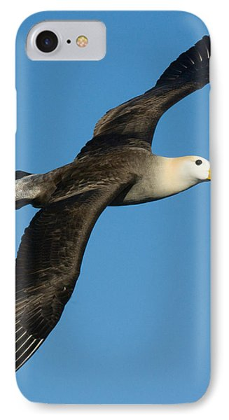 Waved Albatross Diomedea Irrorata IPhone 7 Case by Panoramic Images