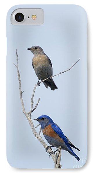 Western Bluebird Pair IPhone Case by Mike  Dawson