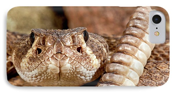 Western Diamondback Rattlesnake IPhone Case by David Northcott