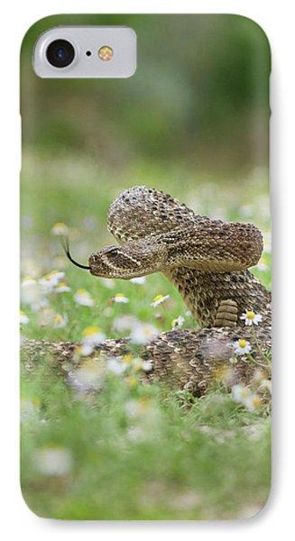 Western Diamondback Rattlesnake IPhone Case by Larry Ditto