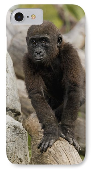 Western Lowland Gorilla Baby IPhone 7 Case by San Diego Zoo