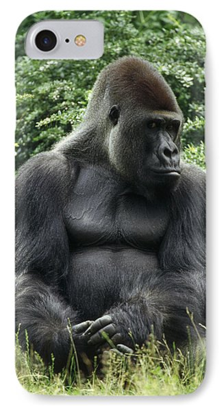 Western Lowland Gorilla Male IPhone 7 Case by Konrad Wothe
