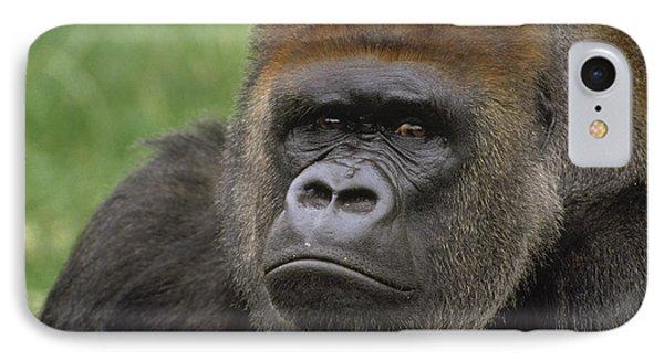 Western Lowland Gorilla Silverback IPhone 7 Case by Gerry Ellis