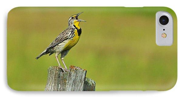 Western Meadowlark IPhone Case by Tony Beck