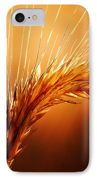 Wheat Close-up IPhone Case by Johan Swanepoel