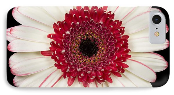 White And Red Gerbera Daisy Phone Case by Adam Romanowicz