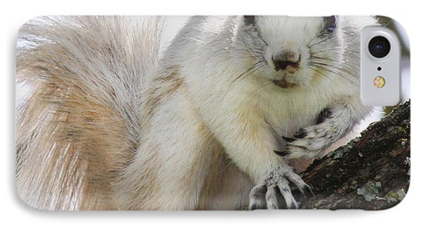 White Fox Squirrel IPhone Case by Betsy Knapp