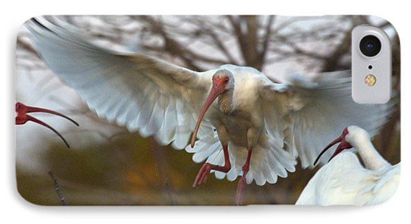 White Ibis IPhone Case by Mark Newman
