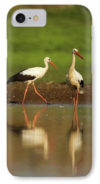 White Stork (ciconia Ciconia) IPhone 7 Case by Photostock-israel