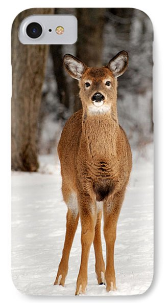 Whitetail In Snow IPhone Case by Christina Rollo