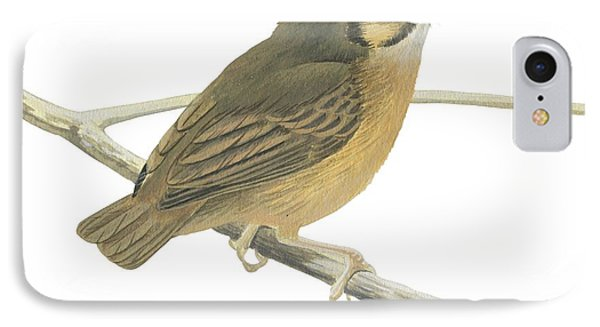 White Throated Spadebill Phone Case by Anonymous