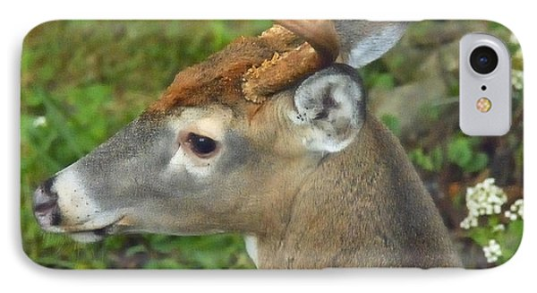 IPhone Case featuring the photograph Whitetailed Deer Buck by A Gurmankin