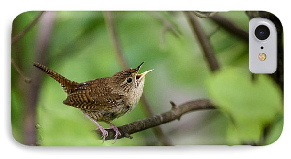 Wild Birds - House Wren IPhone 7 Case by Christina Rollo