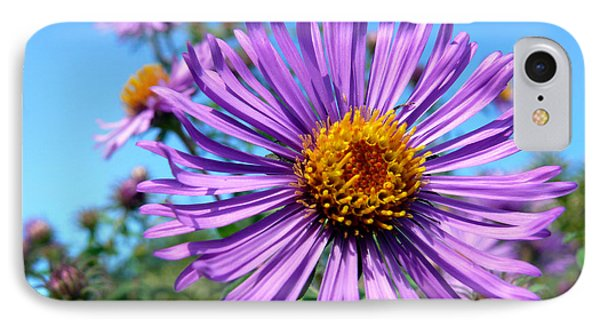 Wild Purple Aster Phone Case by Christina Rollo