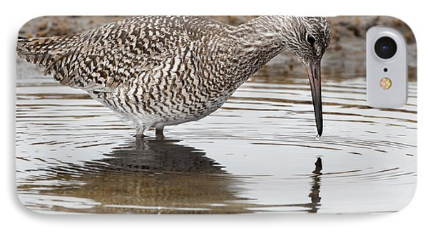 Willet IPhone Case by Bill Wakeley