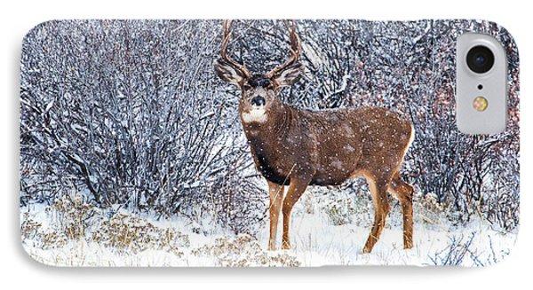 Winter Buck IPhone Case by Darren  White