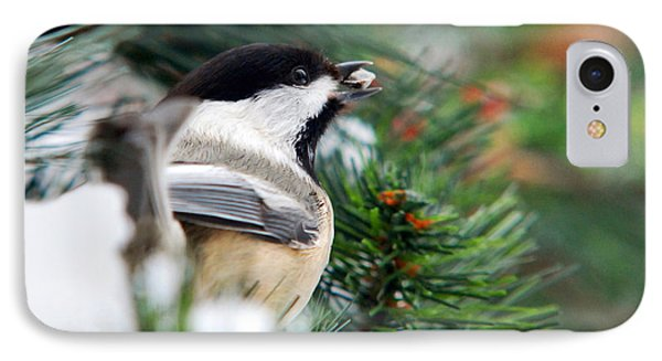 Winter Chickadee With Seed IPhone 7 Case by Christina Rollo