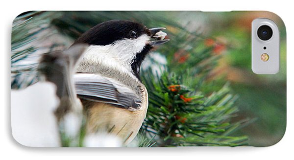 Winter Chickadee With Seed IPhone Case by Christina Rollo