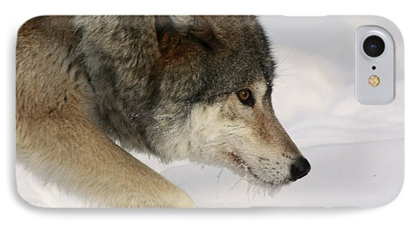 Wolf Dreams Phone Case by Inspired Nature Photography Fine Art Photography