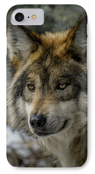 Wolf Upclose 2 IPhone Case by Ernie Echols