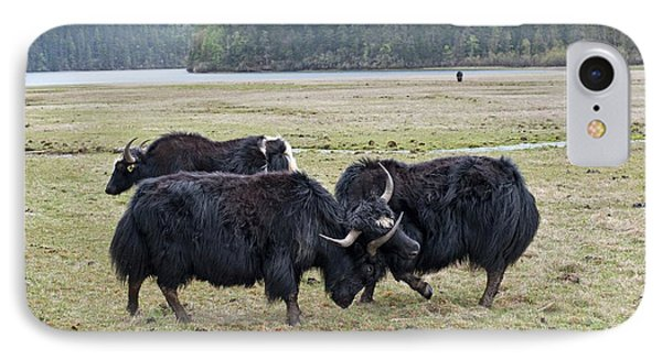 Yaks Fighting In Potatso National Park IPhone Case by Tony Camacho