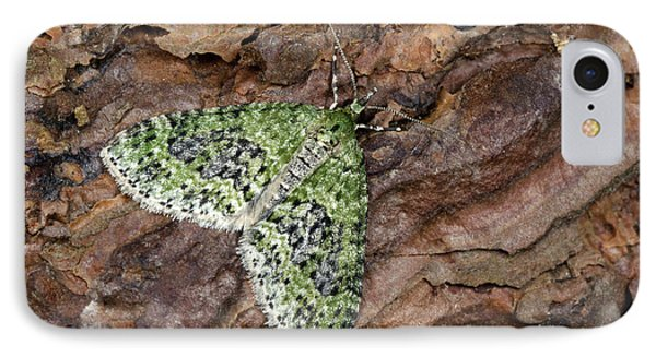 Yellow-barred Brindle Moth IPhone Case by Nigel Downer