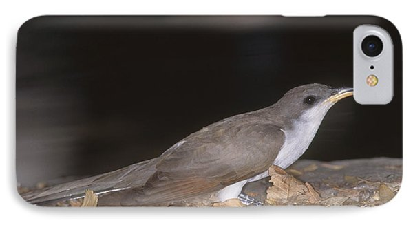 Yellow-billed Cuckoo IPhone Case by Gregory G. Dimijian, M.D.