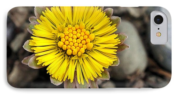 Yellow Coltsfoot Flower Phone Case by Christina Rollo