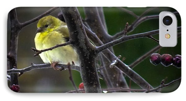 Yellow Finch IPhone Case by Karen Wiles