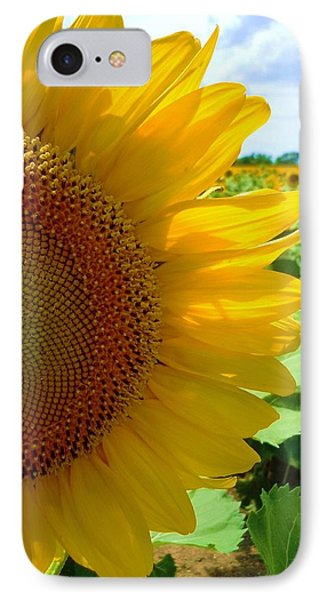 Yellow Glory #2 Phone Case by Robert ONeil