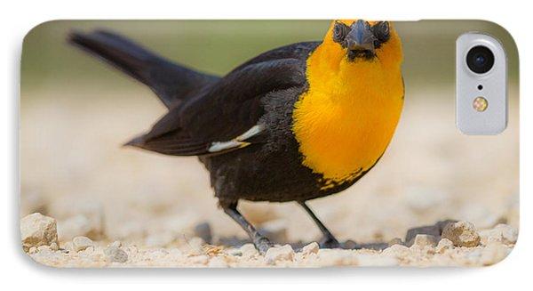 Yellow Headed Blackbird Phone Case by Chris Hurst