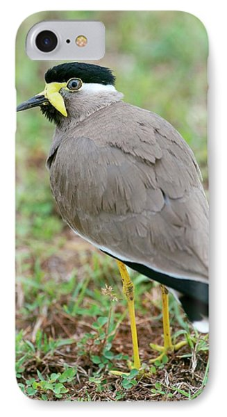 Yellow Wattled Lapwing IPhone 7 Case by Tony Camacho