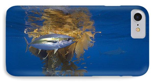 Yellowfin Tuna And Kelp Nine-mile Bank IPhone Case by Richard Herrmann
