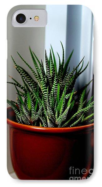 Zebra Cactus Succulent Houseplants Photograph By