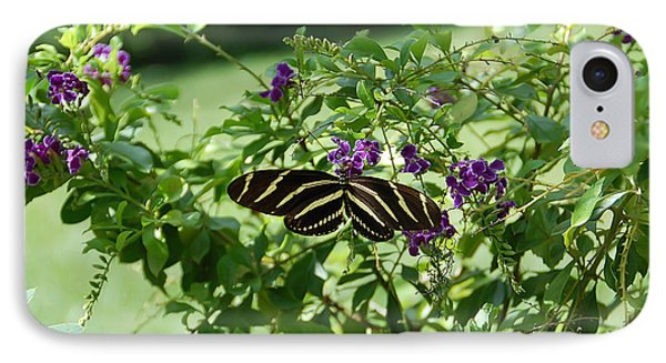 Zebra Longwing Butterfly On Flower IPhone Case by Aimee L Maher Photography and Art Visit ALMGallerydotcom