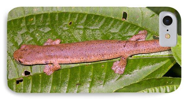 Bolitoglossine Salamander IPhone 7 Case by Dante Fenolio